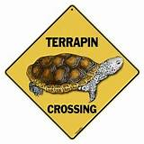 TerrapinCrossingA